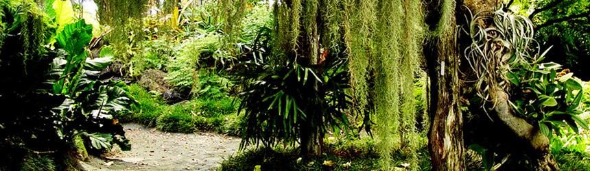 Баннер бестселлера про джунгли
